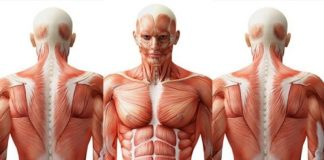 unique features of human body