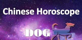 dog weekly chinese horoscope 15 to 21 july 2019