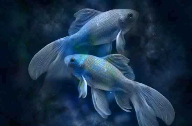 Pisces Horoscope in the Month of August 2019